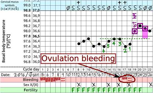 cycle ovulation bleeding