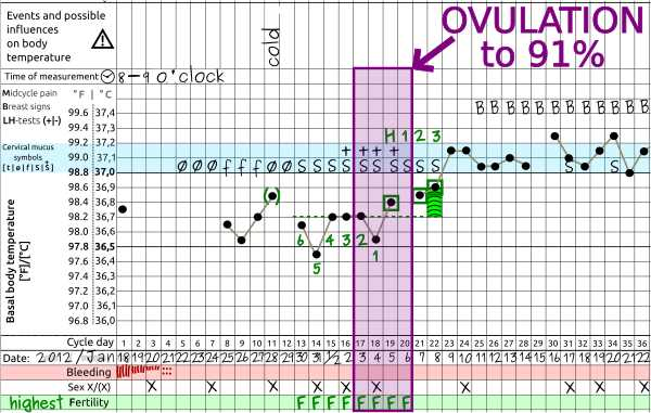 When is ovulation - pregnancy cycle