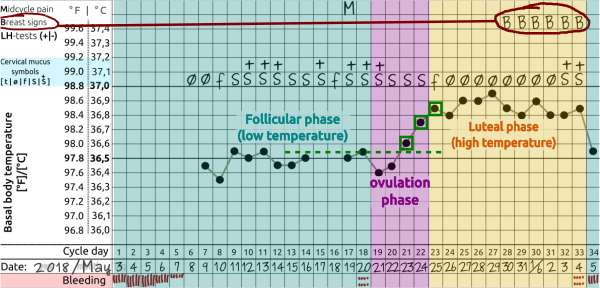 example cycle - breast pain after ovulation
