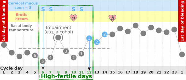 Ovulation dream in menstrual cycle