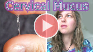cervical mucus ovulation