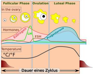 natural cycle basal temperature