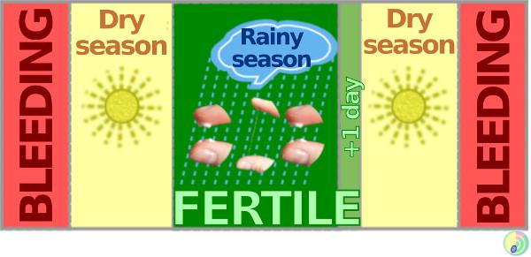 cervical mucus rain