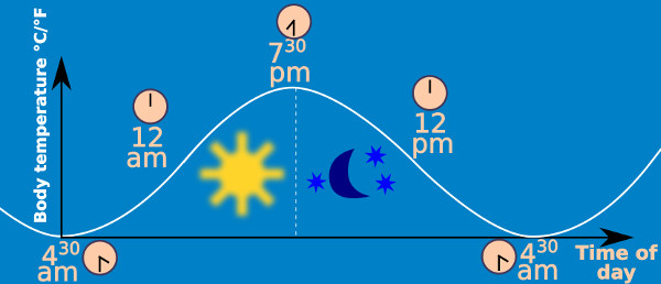 Circadian rhythm of Basal Body Temperature